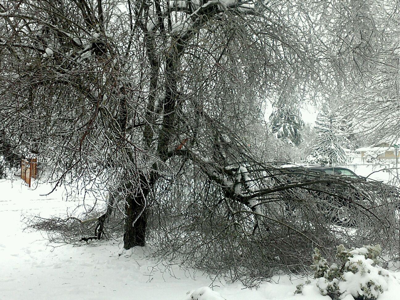 fallen_tree2